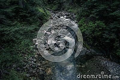 Dark Forest Stream Free Public Domain Cc0 Image