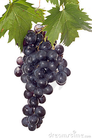 Free Dark Grape And Leaf Stock Images - 3100874