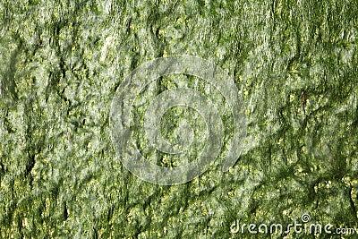 Dark green seaweed