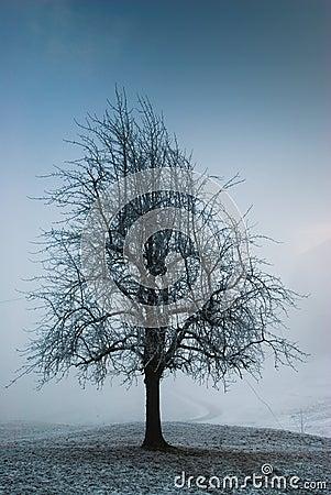 Dark moody tree