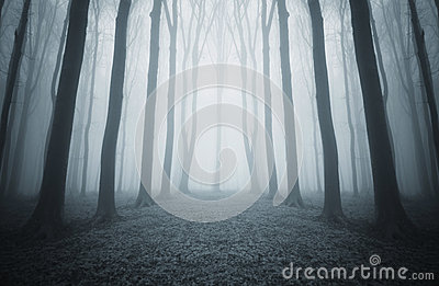 Dark mysterious forest with blue fog  on halloween