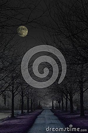 Dark mysterious park