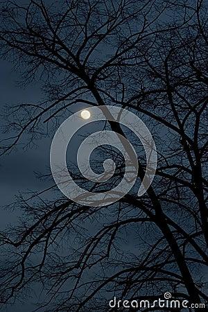 Free Dark Night Royalty Free Stock Photos - 2333318