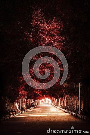 Dark Red Autumn Tree Path