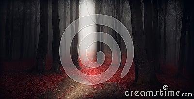 Dark trail trough a autumn forest with fog
