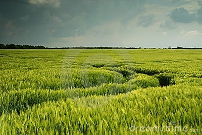 Dark Wheat Field Landscape Stock Image - Image: 2676281