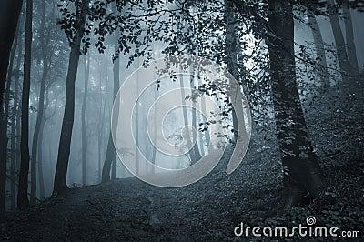 Dark woods with blue fog on halloween evening