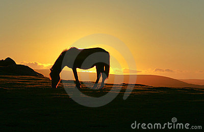 Dartmoor pony at sunset