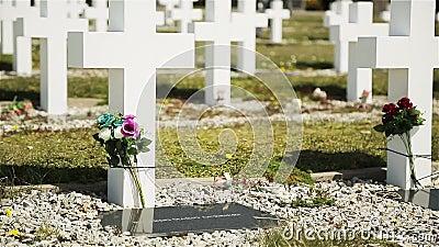 Darwin Argentyński Militarny cmentarz, Falkland wyspy Islas Malvinas zbiory wideo