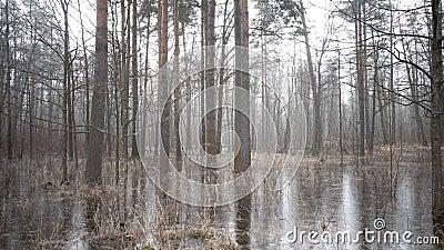 Das Frühlingsholz überschwemmte mit Wasser und das unter Eis eingefroren ist stock video