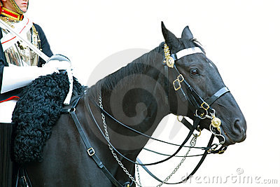 Das Pferd