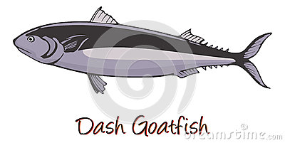 Dash-and-dot Goatfish, Color Illustration