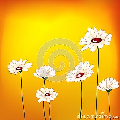 Dasie flower in the field
