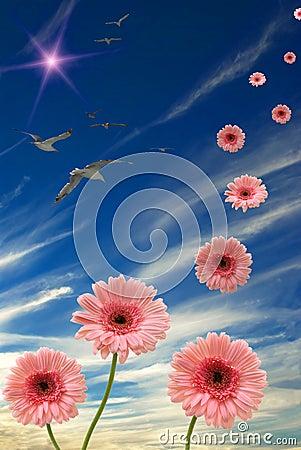 Free Dasies Stock Images - 3602564