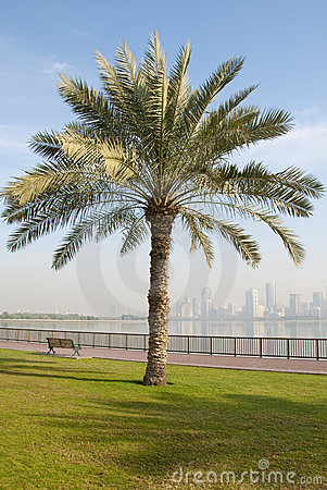 Free Date Palm Royalty Free Stock Images - 12660119
