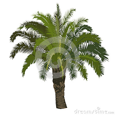 Date palm tree in color Vector Illustration