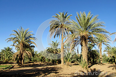 Dating-Dienste palm desert ca
