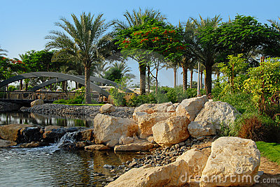 Date palm trees in park