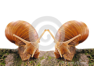 Dating snails