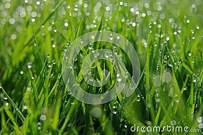 dauw | Natuur foto van mdrotterdam | Zoom.nl