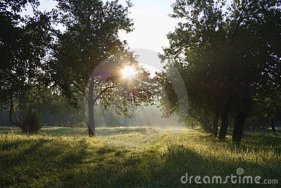 Dawn in the apple garden