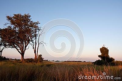 Dawn in Botswana