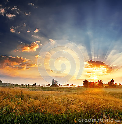 Dawn in a field