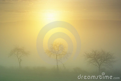 Dawn in fog