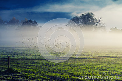 Dawn in the fog