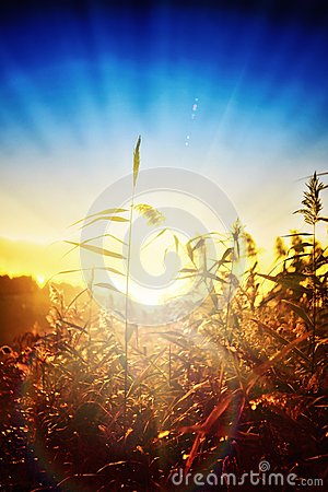 Free Dawn In The Reeds Stock Photography - 45511182