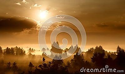 Dawn in a meadow