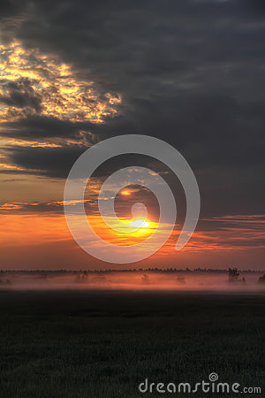 Dawn. Meadow. Fog.
