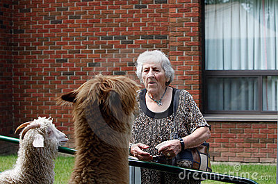 Day at the petting zoo for seniors