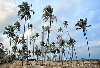 Day view of sand beach with coconut trees