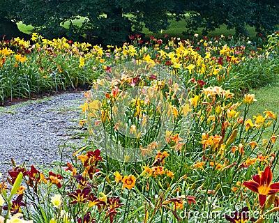 Daylily garden patjh