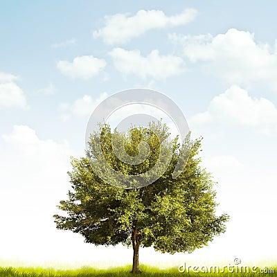 Dębowy drzewo