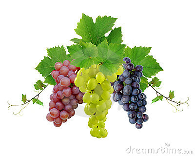 Ddecoration of wine grapes