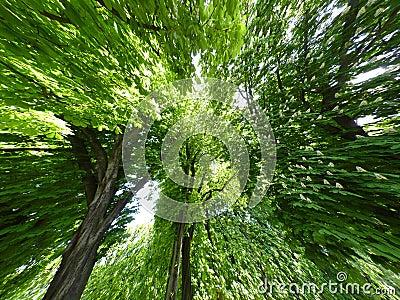 De Achtergrond van bomen