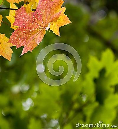 De achtergrond van de herfst