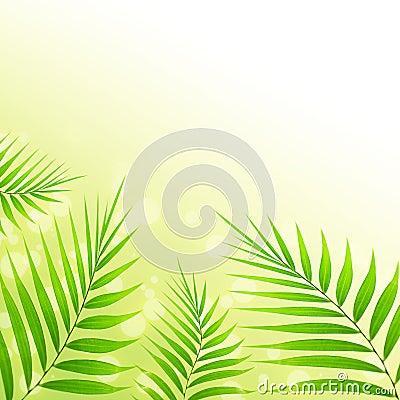 De achtergrond van palmbladen