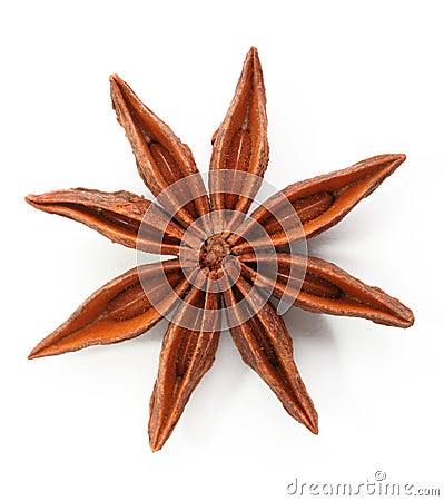 De anijsplant van de ster