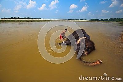 De aziatische olifant die van scrubbs van de mens in de rivier van