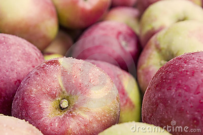 De bak van de appel