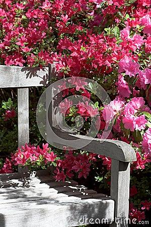 De bank en de bloemen van de tuin