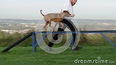 De behendigheid van de hondsport stock video