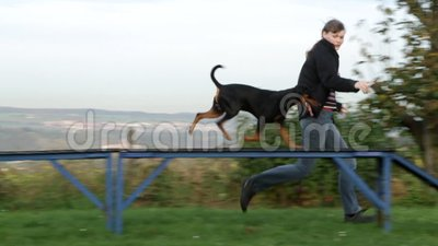 De behendigheid van de hondsport stock footage
