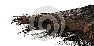 De Beweging van het haar