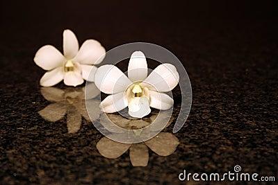 De bezinning van de orchidee