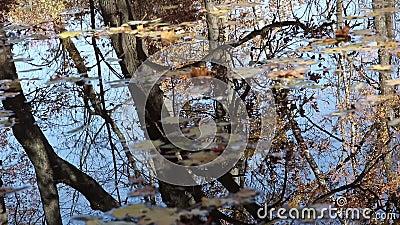 De bezinningen van de de herfstvijver met gevallen bladeren stock video