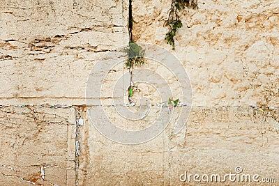 De bladen van het gebed